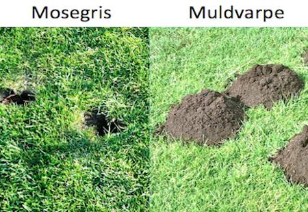 Bekæmpelse af mosegris