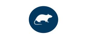 Kommunal Rottebekæmpelse