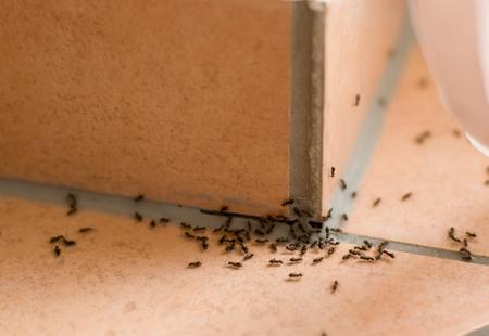 Undgå myrer i huset