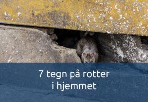 7 tegn på rotter