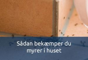 Bekæmp myrer i huset