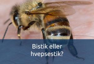 Bistik eller hvepsetik