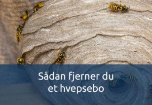 Sådan fjerner du et hvepsebo