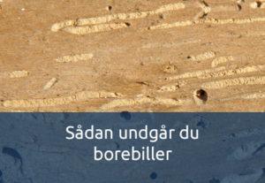 Undgå borebiller