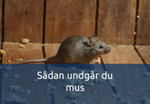 Undgå mus