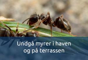 Undgå myrer
